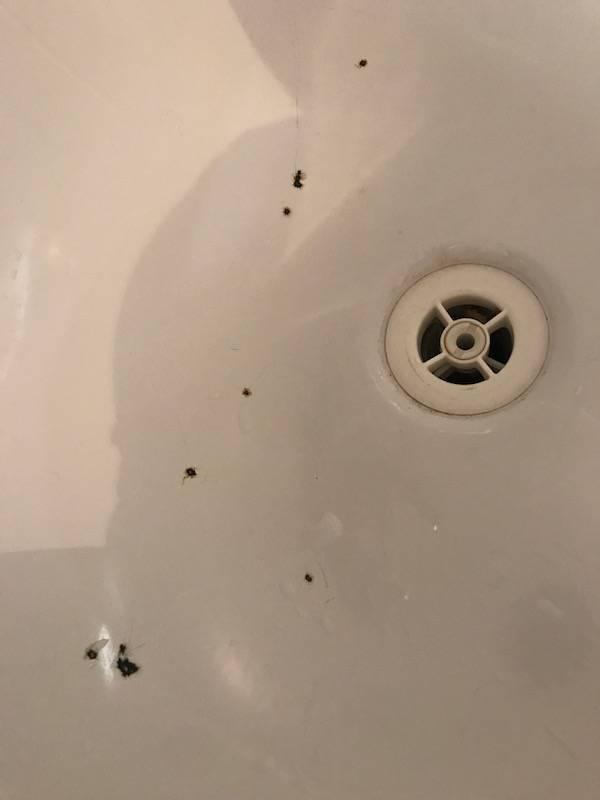 Reparation De Multiples Impacts Sur Baignoire Acier A Narbonne Bain D Oc